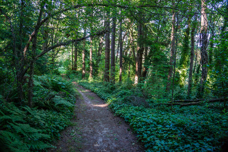 a path leads through evergreen trees at Saltwater State Park in Des Moines, Washington.