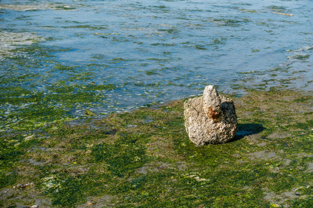 Baracles cover an object on the shore at Dash Point State Park.