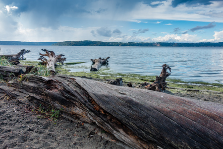 A landscape view of driftwood along the Puget Sound. 写真素材