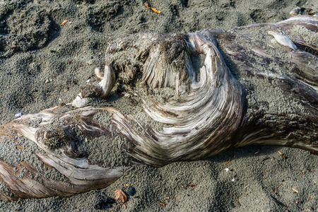 A closeup shot of gnarly driftwood that is partially covered with sand.