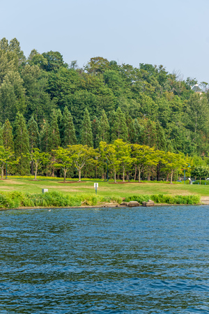A veiw of the lawn and trees at Gene Coulon Park in Renton, Washington. Фото со стока