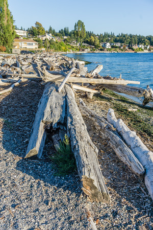 Piles of driftwood line the shore in Normandy Park, Washington.