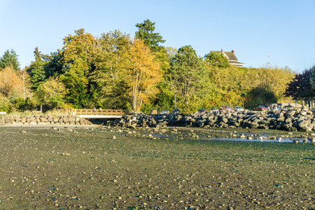 A landscape shot of autumn trees and low tide in Des Moines, Washington.