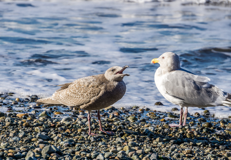 Two seagulls stand on rocks as ocean waves roll in.