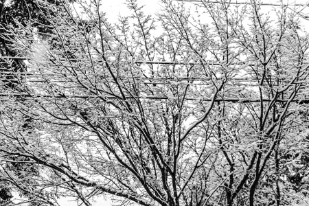 Snow clings to bare branches that surround wires.