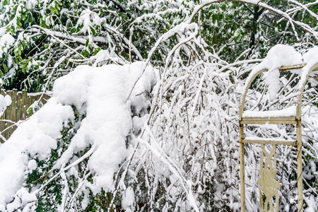 Bushes are blanketed with snow.