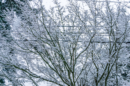 Snolw clings to bare branches that surround wires. 写真素材
