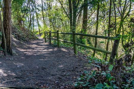This trail at Marine View Park in Normandy Park, Washington leads to the beach. Stock Photo