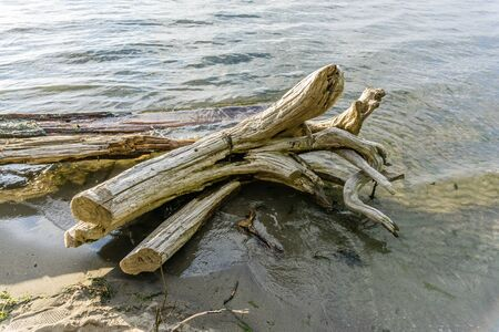 Driftwood sits in the water on the shoreline at Dash Point State Park in Washington State.