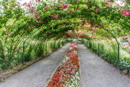 A rose arbor creates a tunnel at Point Defiance Park in Tacoma, Washington.