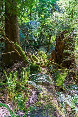 A fallen tree lies on the forest floor at Point Defiance Park in Tacoma, Washington.