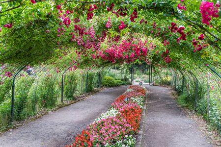 Eine Rosenlaube schafft einen Tunnel im Point Defiance Park in Tacoma, Washington.