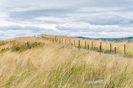 A view of prairie grass at Dune Peninsula Park in Tacoma, Washington.