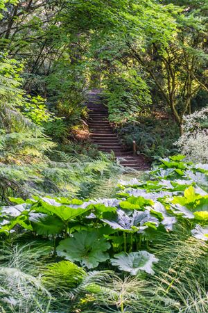 A view of steps and foliage at the Seattle Arboretum.