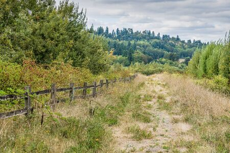 Overgrown diirt road in Kent, Washington.