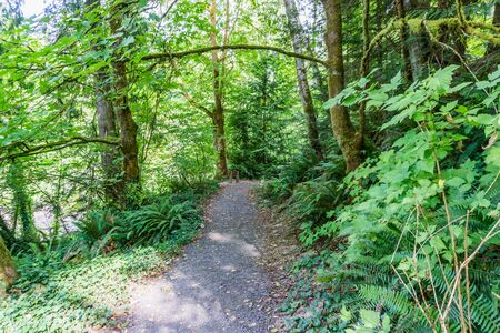 A trail at Priest Point Park in Olympia, Washington. Zdjęcie Seryjne