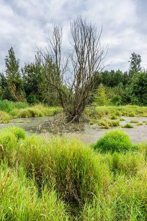 Wildlofe refuge wetlands in Kent, Washington.