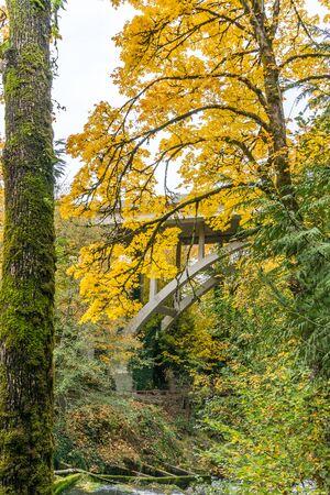 Yellow autumn leaves at Tumwater Falls Park in Washington State. Stock fotó