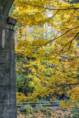 Brilliant autumn leaves at Tumwater Falls Park in Washington State.