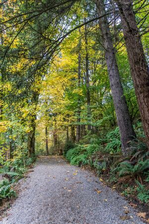 A path at Tumwater Falls Park in Washington State. It is autumn.
