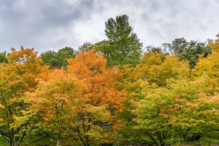Trees are bursting with autumn colors at Gene Coulon Park in Renton, Washington. Stock fotó