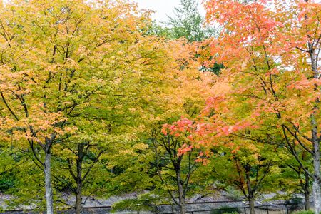 Trees are bursting with autumn colors at Gene Coulon Park in Renton, Washington. Фото со стока - 133806569