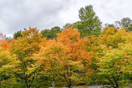 Trees are bursting with autumn colors at Gene Coulon Park in Renton, Washington. Фото со стока