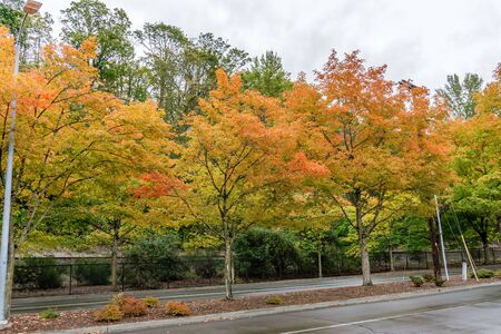 Trees are bursting with autumn colors at Gene Coulon Park in Renton, Washington. Фото со стока - 134218440