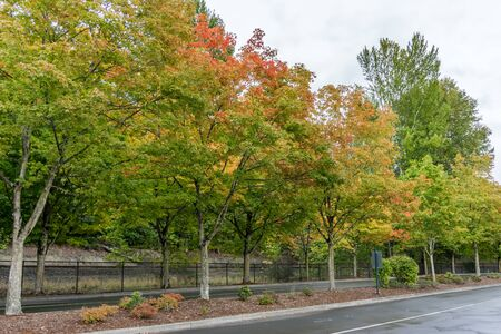 Autumn colors on roadside tree at Gene Coulon Park in Renton, Washington. Фото со стока - 134218447