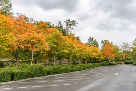 Autumn colors on roadside tree at Gene Coulon Park in Renton, Washington. Фото со стока - 134218452