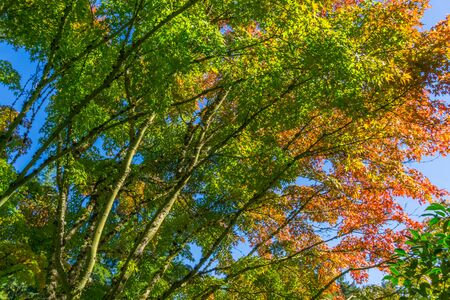 A veiw of autumn leaves and tree branches.