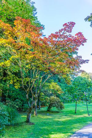 A view of colorful autumn trees in a Seattle garden.