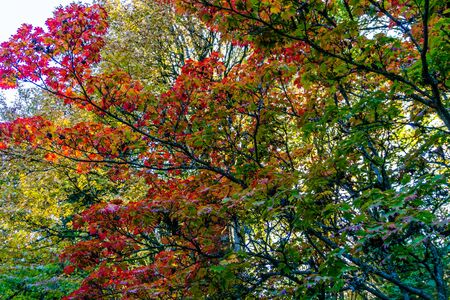 A view of colorful autumn leaves in Seattle, Washington.