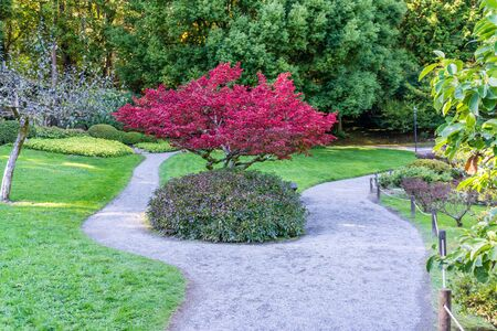 A small red tree and a garden path in Seattle, Washington. 写真素材