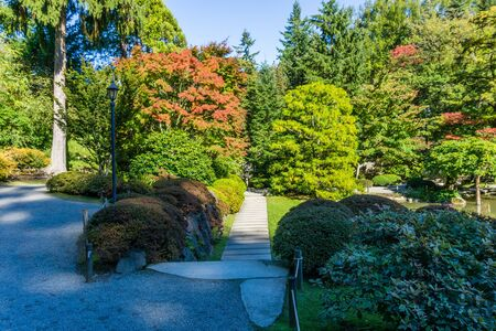 A view of a Seattle garden in autumn.