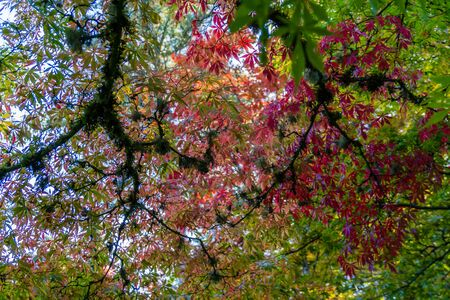 A view of  red autumn leaves on dark branches in Seattle, Washington.