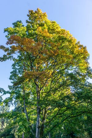 A view of a tall tree in autumn. 写真素材