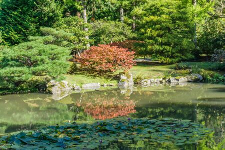 Foliage is reflected in a pond at a Seatle garden. 写真素材