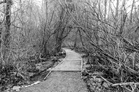 Bare trees surround a trail at Dash Point State Park in Washington State. Фото со стока