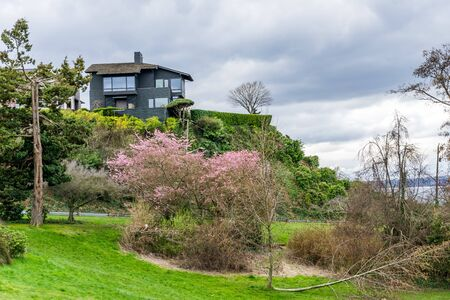 Pink spring blossoms are in full bloom on a Dogwood tree in a West Seattle park. Stock Photo