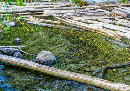 Water and driftwoo at Gene Coulon Park in Renton, Washington. Stock fotó