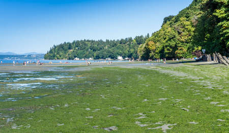 A summer day at Dash Point State Park in Washington State. Stock fotó
