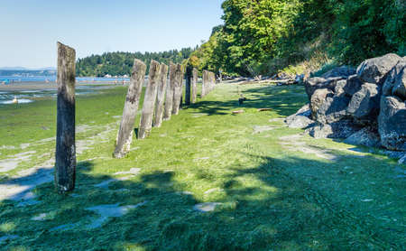 Old pilings lean toward the sea at Dash Point State Park in Washington State.