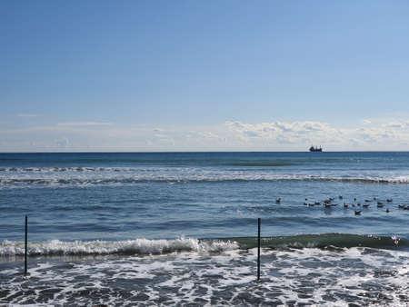 Seagulls laying on the sea