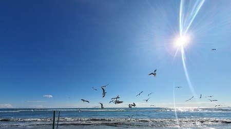 Seagulls on the sky