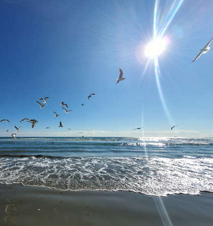 The seagulls flying by the sea