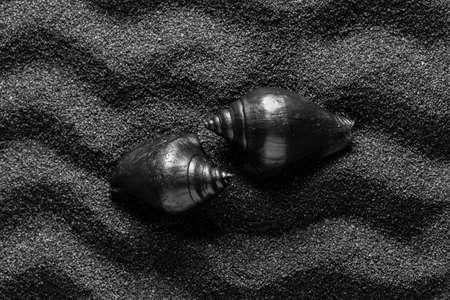 Black shell on a black sand dunes background. Black design. Stock Photo