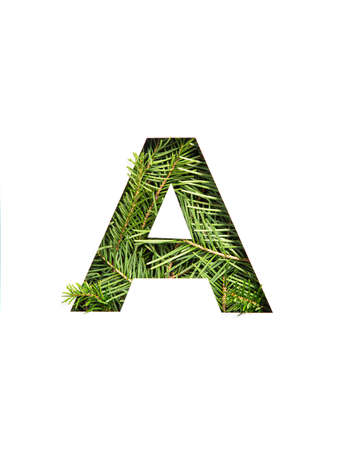 Letter A of English alphabet of natural spruce tree needles and paper cut isolated on white. Typeface of fir
