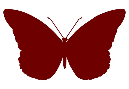 buterfly: Red isolated vector Butterfly insect on white background. Illustration