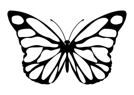 buterfly: Siproeta stelenes - malalachite butterfly isolated - vector. Illustration